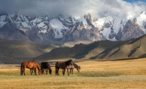 Национальные и региональные особенности Казахстана